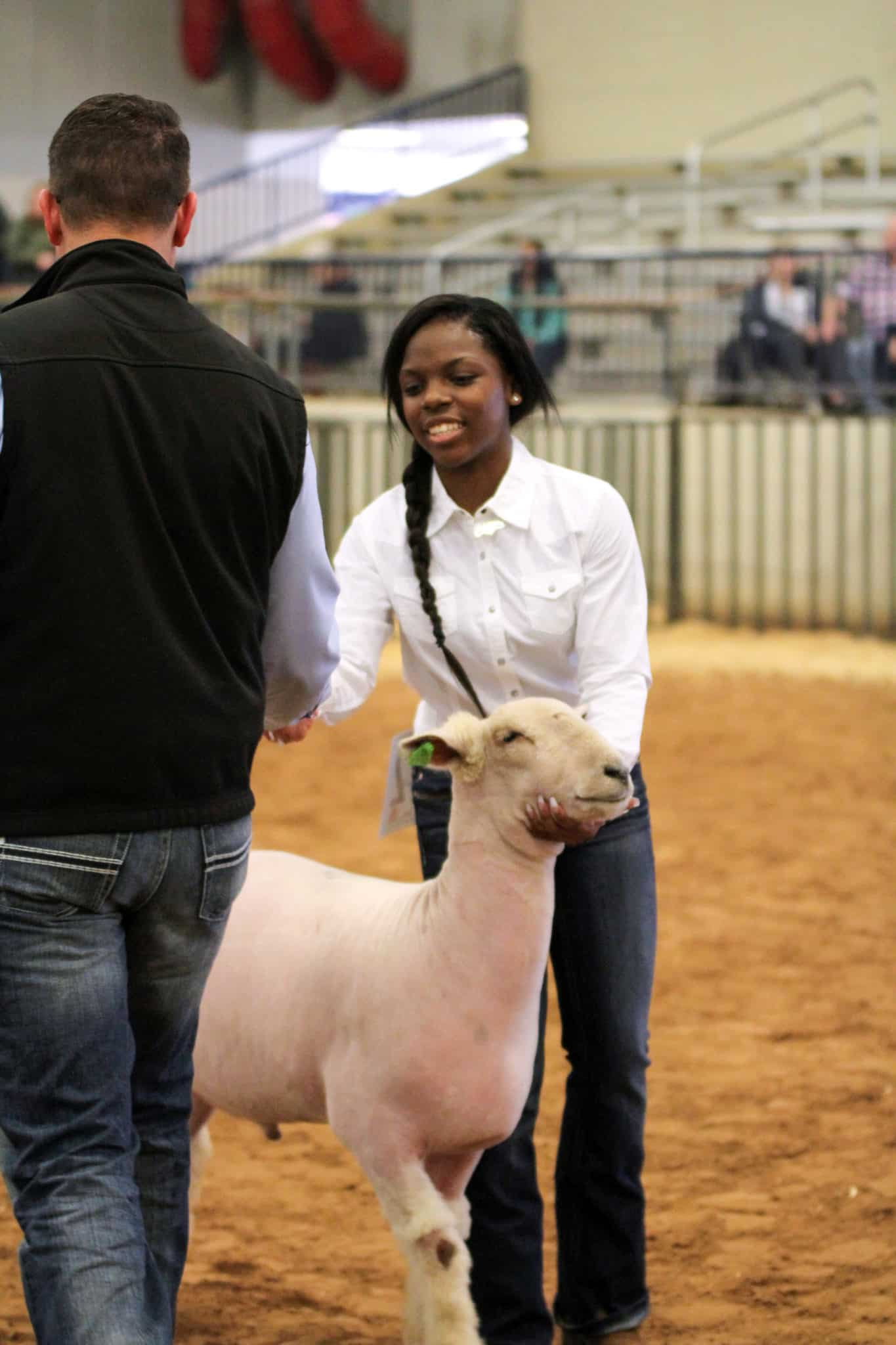 FFA Student Showing Sheep