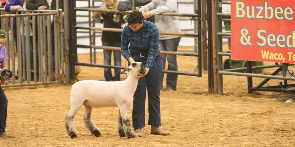 News-Notes_Livestock_DNayjah